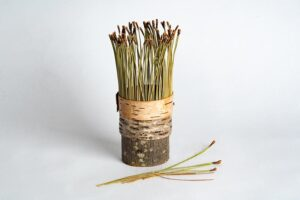 Birch bark vessel with pine needles Ht 17 x 6 cms £ 48.00