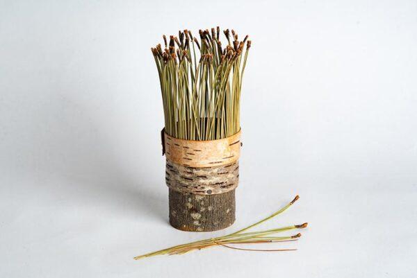 Birch bark vessel with pine needles Ht 17 x 6 cms £ 48.00