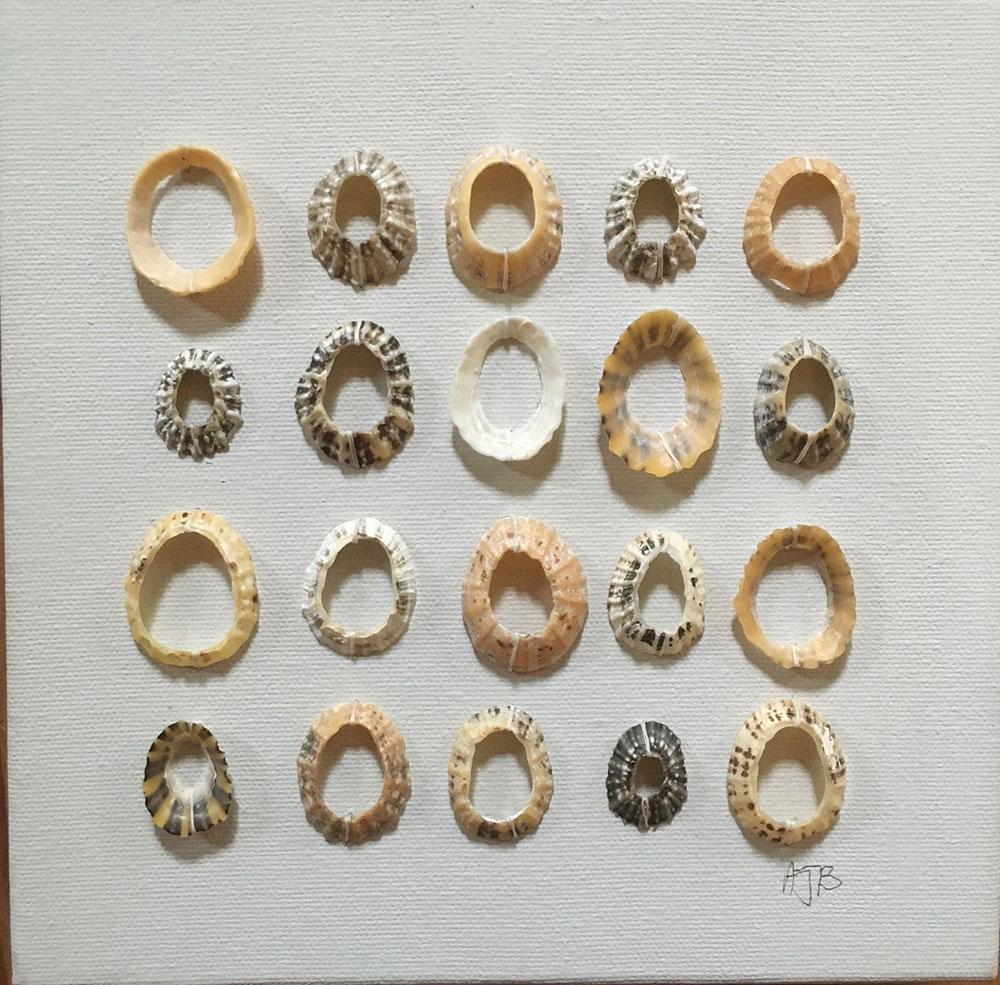 Collage-of-Cornish-shells