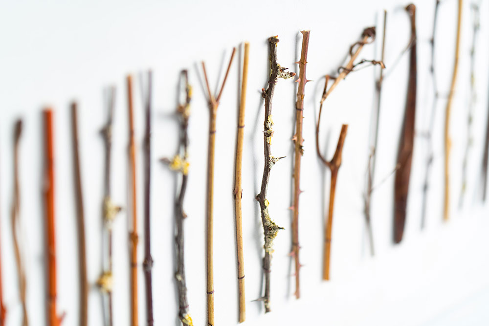 Collage-of-twig-detail