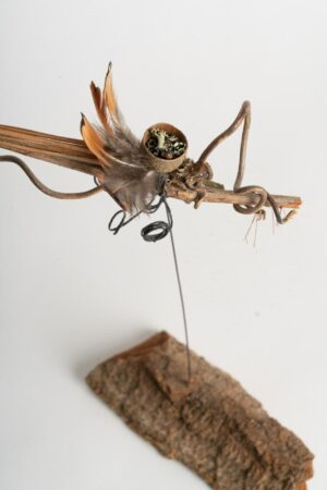 Daphne the insect h 30 x w 40 cms £24 .00