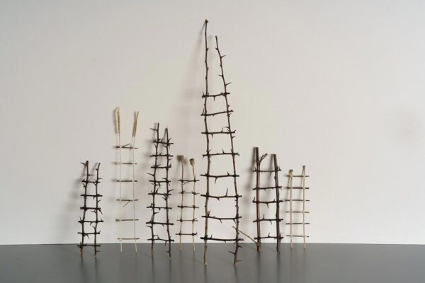 Ladders of bamboo, thorn and twig Various styles Medium 24 x 4 cms £22.00 Large 46 x 5 cms £35.00