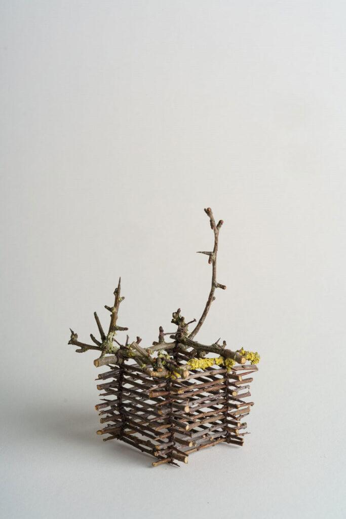 Thorn-Basket